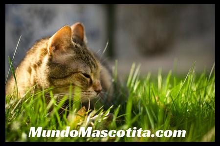 Plantas Toxicas Para Gatos Domésticos