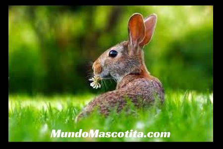 Juguetes para Conejos Caseros