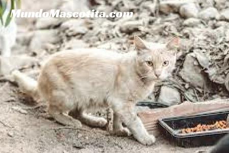 Nombre para Gatos en Japones y su Significado