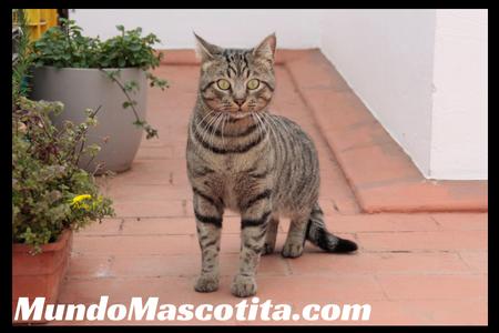 Planta Repelente para Gatos Eficaz