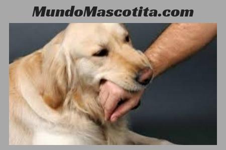 Como Curar una Mordida de Perro en Casa