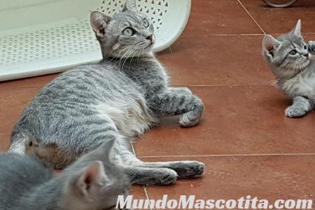 Cuanto dura un Embarazo de un Gato
