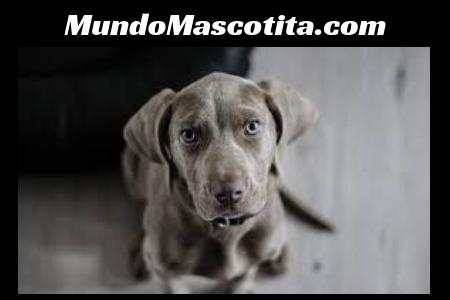 Desparasitante Natural para Perros Cachorros