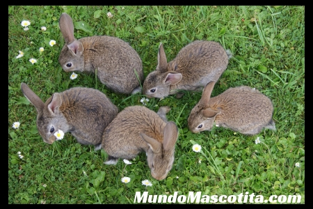 Que Puede Comer un Conejo  Bebe