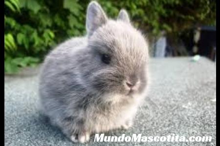 Que Puede Comer un Conejo