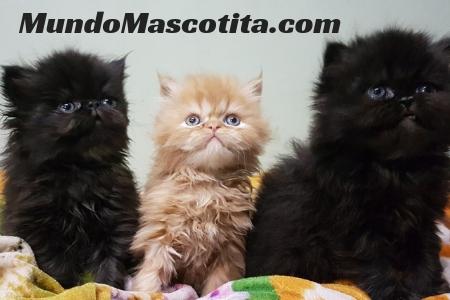 Cuanto tiempo tarda en nacer un gato mundo mascotita - Cuanto tarda un tasador en tasar un piso ...