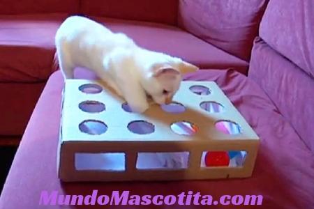 Como Hacer Juguetes para Gatos Caseros y Fáciles