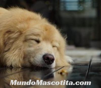 Epilepsia en Perros Tratamiento Natural
