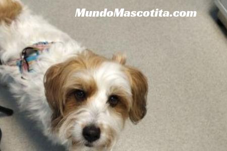Leptospirosis en Perros Tratamiento