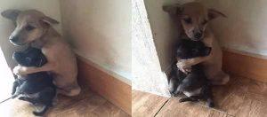 Cachorro Sostiene su Amigo
