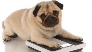 Controlar el Peso en Nuestras Mascotas