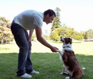 Enseñar a Tú perro a dar la Pata