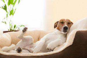 Los perros también pueden soñar