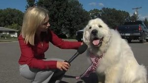 Perro Fue Elegido Alcalde
