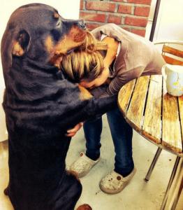 Perros Sienten el Dolor de sus Dueños
