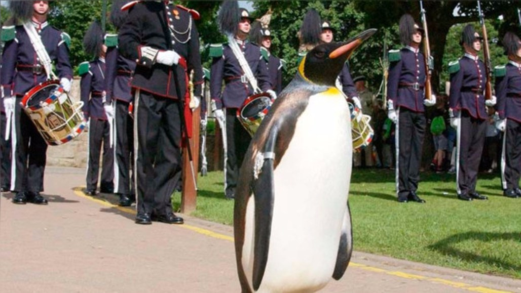 Pingüino Es Condecorado