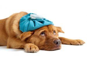 Por Qué Mi Perro Hace Heces Blandas?