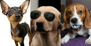 Qué Personalidad Tiene Su Perro