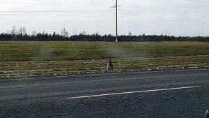 Un Perro Que Espera En La Carretera