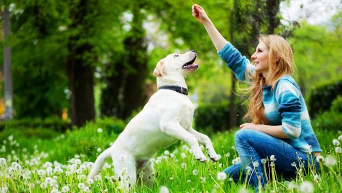 ¿Cómo Podemos Entrenar A Nuestro Perro?