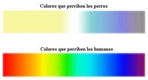colores que ven los perros