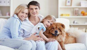 Haz que tu perro se adapte al nuevo hogar
