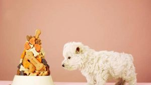 Calcular La Cantidad De Comida Diaria Para Tu Perro