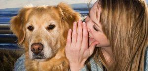 Los Perros Entienden Lo Que Le Dices