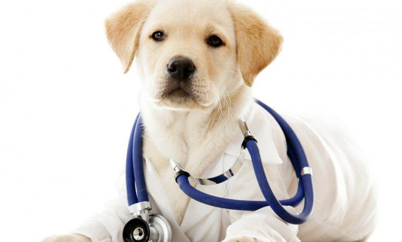 Los Perros Pueden Detectar Enfermedades