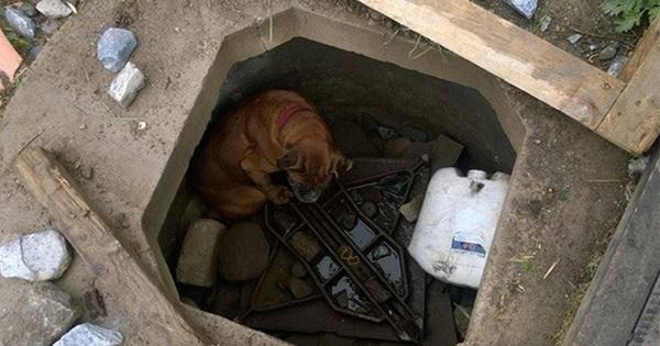 Niña Salva Perrita Abandonada