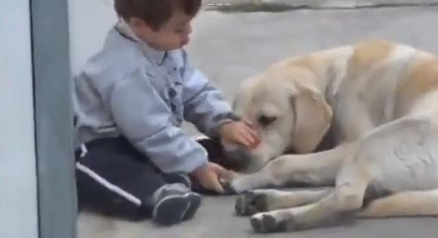 Niño Con Síndrome de Down Y Su Perro
