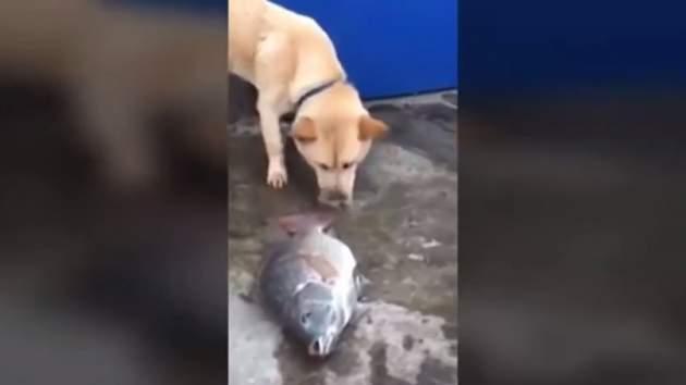 Perro Trata De Revivir Un Pez