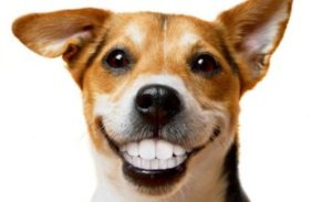 La Higiene Dental De Su Perro