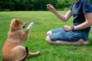 como-podemos-educar-a-un-cachorro1