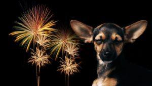 Consejos Para El Cuidado De Tu Mascota En El Fin De Año