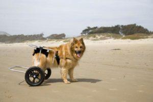 Displasia De Cadera En Los Perros