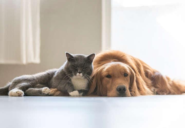 Como Hacer que mi Perro se Lleve Bien con mi Gato