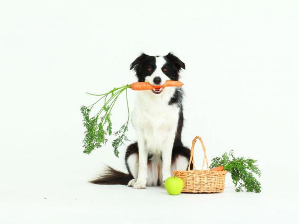 Mi Perro Está Estreñido Remedios Caseros
