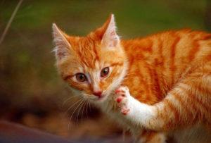 Como Hacer que Mi Gato Deje de Orinar en Todos Lados