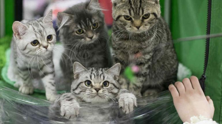 Cuanto Tiempo Viven Los Gatos Domésticos
