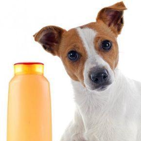 Los Perros Pueden Comer Mandarina