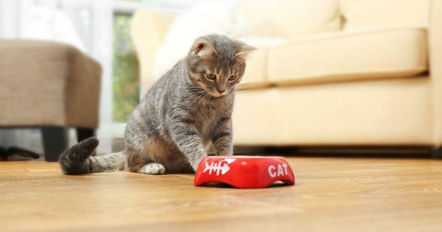 Mi Gato no Come ni Toma Agua y está Decaído