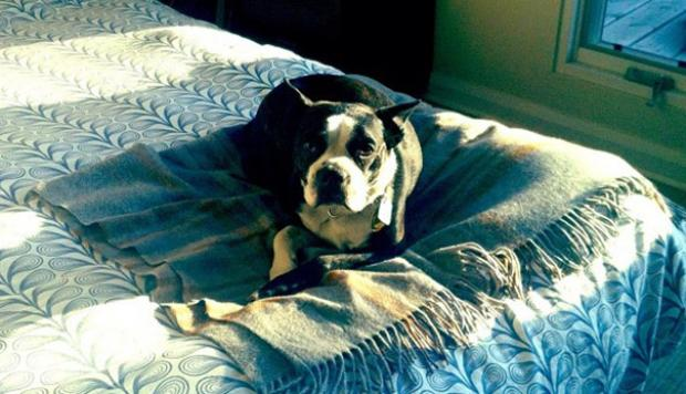 Mi Perro se Orinó en mi Cama Como Quitar el Olor