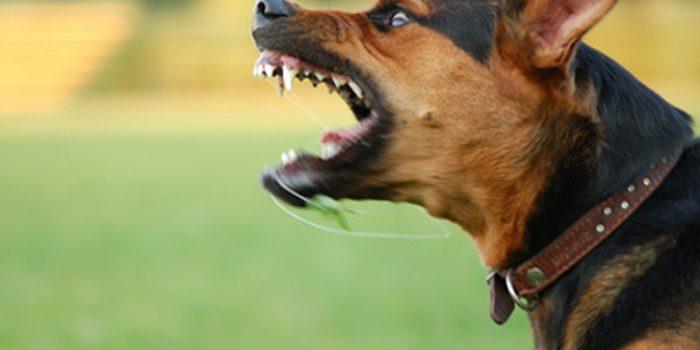 Tengo un Perro Agresivo que Hago