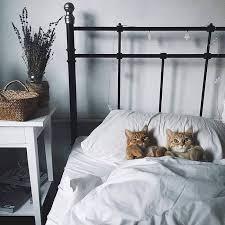Un Gato Puede Vivir en Una Habitación