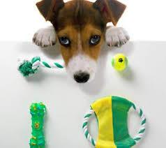 Beneficios de los Juguetes Para Perros