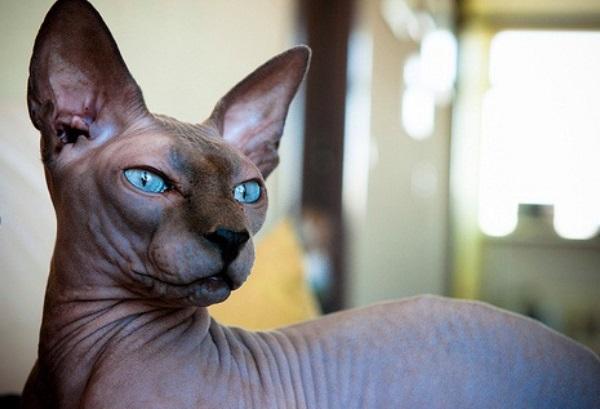 De Que Color Ven Las Cosas Los Gatos
