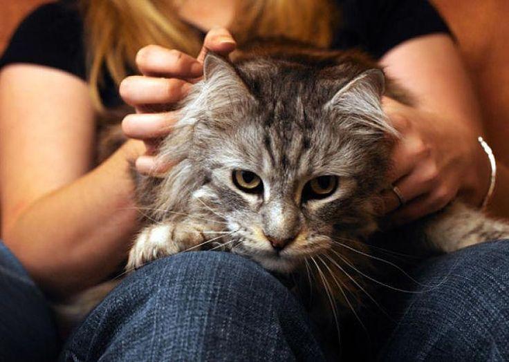 Que Significa Cuando un Gato te Lame y te Muerde
