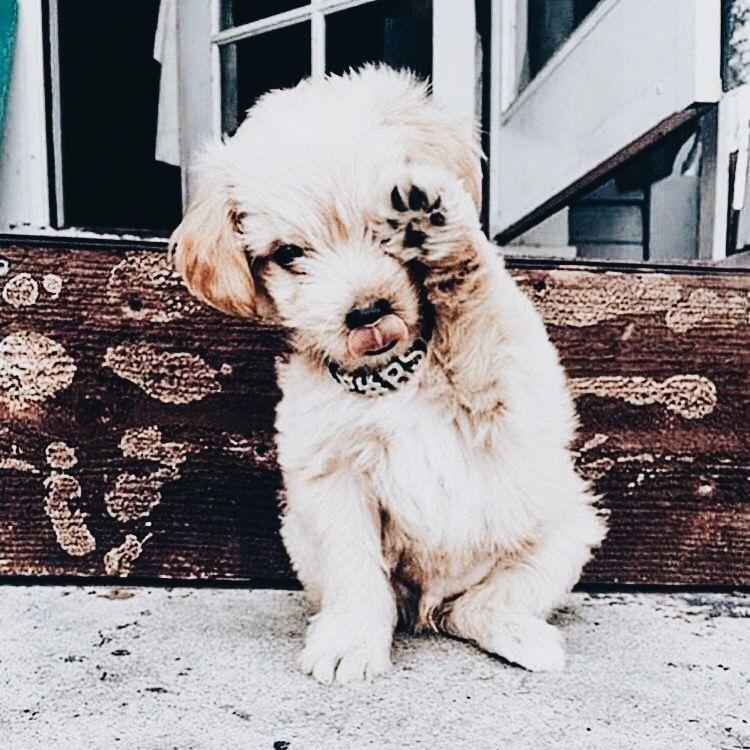 Que Significa que Mi Perro Rasque el Piso