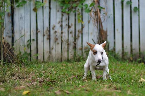 Remedios Caseros Para Perros Con Diarrea